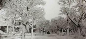 emmalaan-1955-foto-lia-gerdingh-smeurkl_1038
