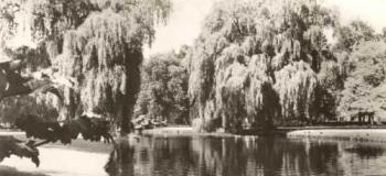 wilhelminaparkspanjersber_1038